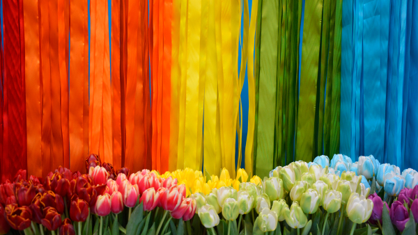 Tulips in rainbow colors in front of rainbow streamers.