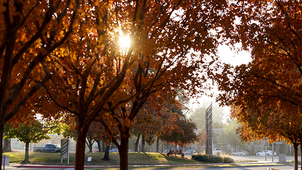 Sun shining through the fall leaves