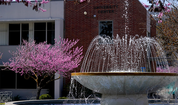 The fountain at Fresno State and a pink flowering tree.