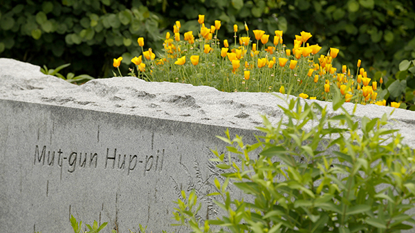 Yellow flowers in Peace Garden in front of rock wall that has etched Mut-gun Hup-pil