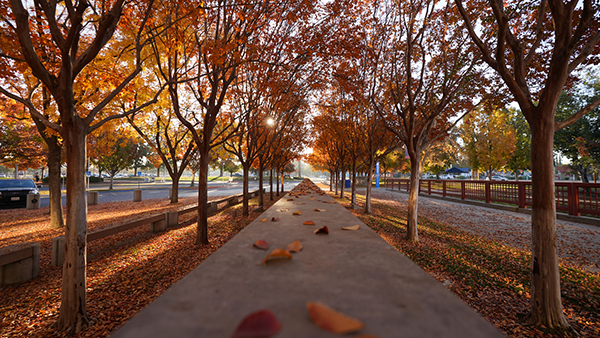 Fall path with yellow and orange leaves on trees.