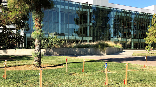Utility marking flags in grass in front of Henry Madden Library