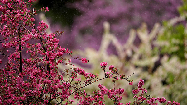 Flowers in pink, white, and purple