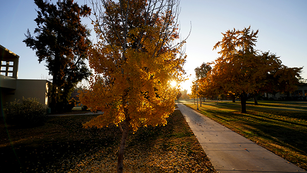 Walkway on campus toward the sun with trees in fall colors